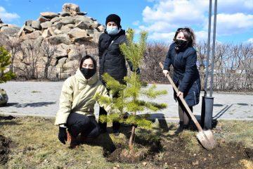 Мемлекеттік қызметшілер «Көкшетау – көк қарағай мекені» экологиялық акциясын бастады